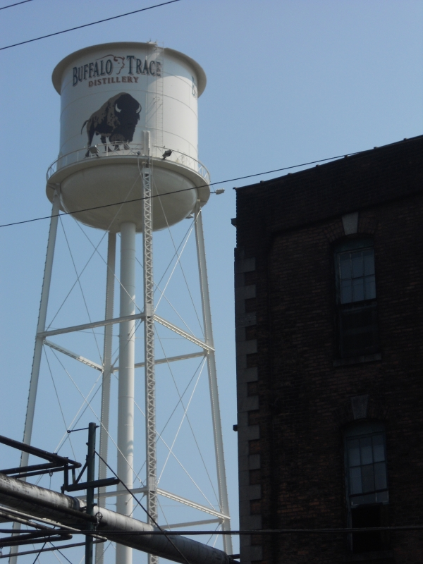Buffalo Trace, Kentucky, USA